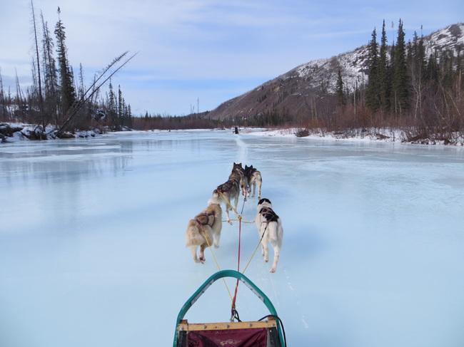 Dog sledding along the frozen river
