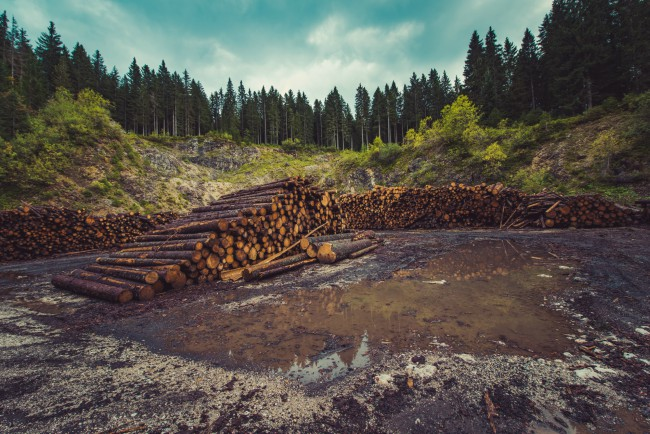 Forestry activity contaminating water sources