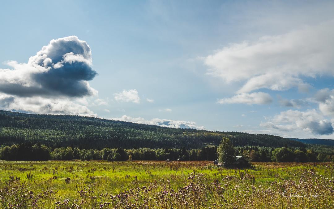 Sweden Meadow